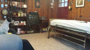 Oscar at Grandma's Bed